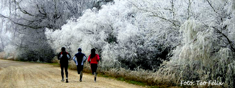 invierno_arboles_escarcha